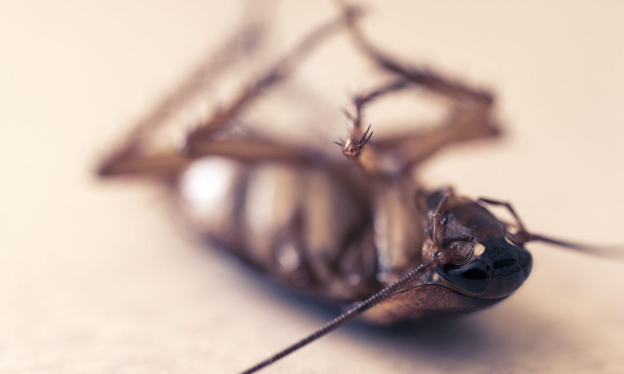 Rák lépfene rovar